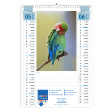 Calendario A3 fogli 6+1
